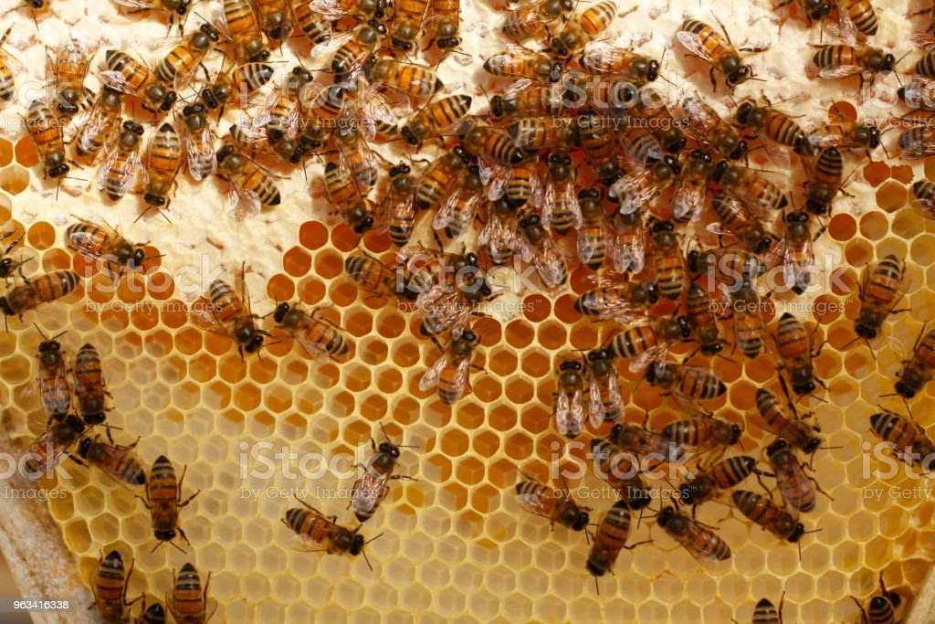 Honey bees kept in a bee box hive on a private farm working making honey on a farm in rural Australia stock photo