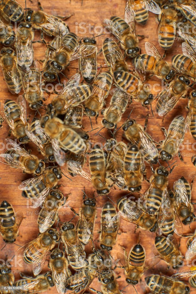 Honey bees on a wooden surface stock photo