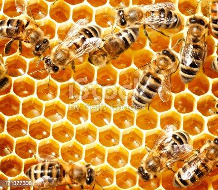 istock Honey bees 171377308