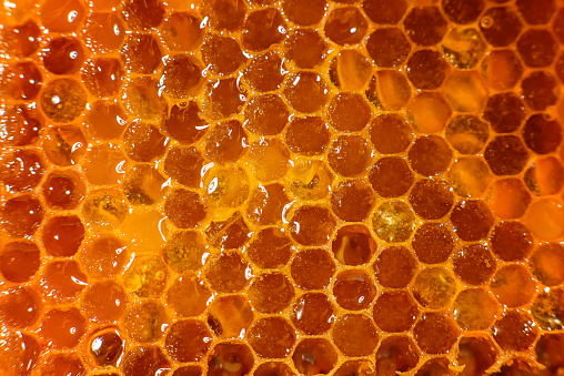 Honey Closeup Amber Sweet Honey In Honeycomb Transparent Honey Flows Down  The Honeycomb Stock Photo - Download Image Now - iStock