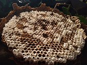 Honey comb close-up view of the beehive