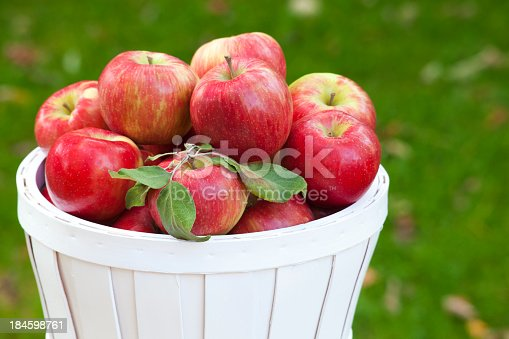 A painted wooden basket of juicy ripe Honey Crisp apples displayed outdoors.  The Honeycrisp (Malus domestica 'Honeycrisp') is an apple cultivar developed at the University of Minnesota and released in 1991.  The popular Honeycrisp apple is valued due to its sweetness and firm texture as well as it's shelf life.