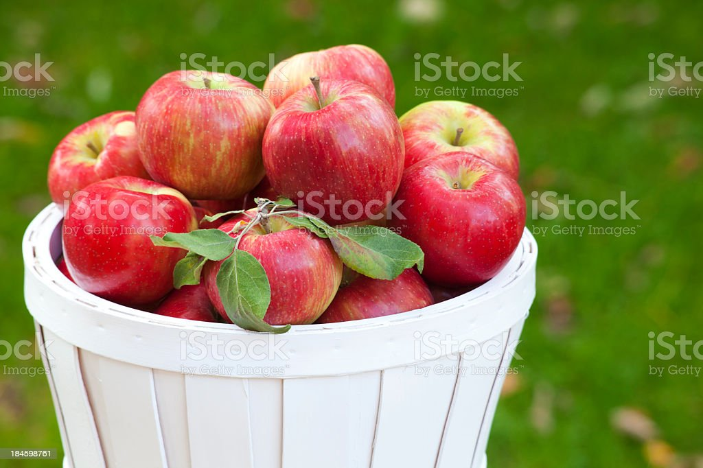 Honey crisp apples in a basket stock photo