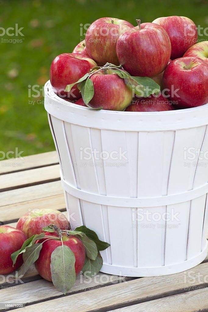 Honey Crisp Apples in Basket stock photo