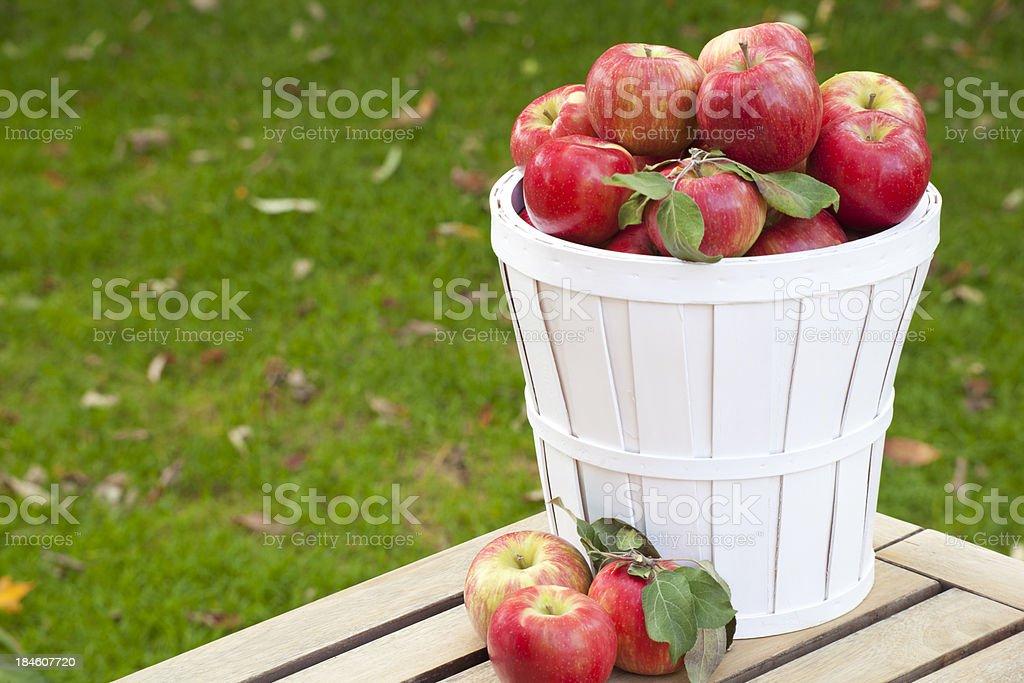 Honey Crisp Apples Outdoors stock photo