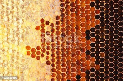 istock Honey in frame. 1022625860