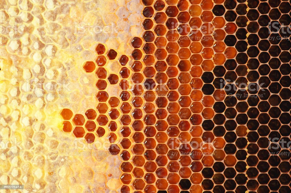 Honey in frame. stock photo