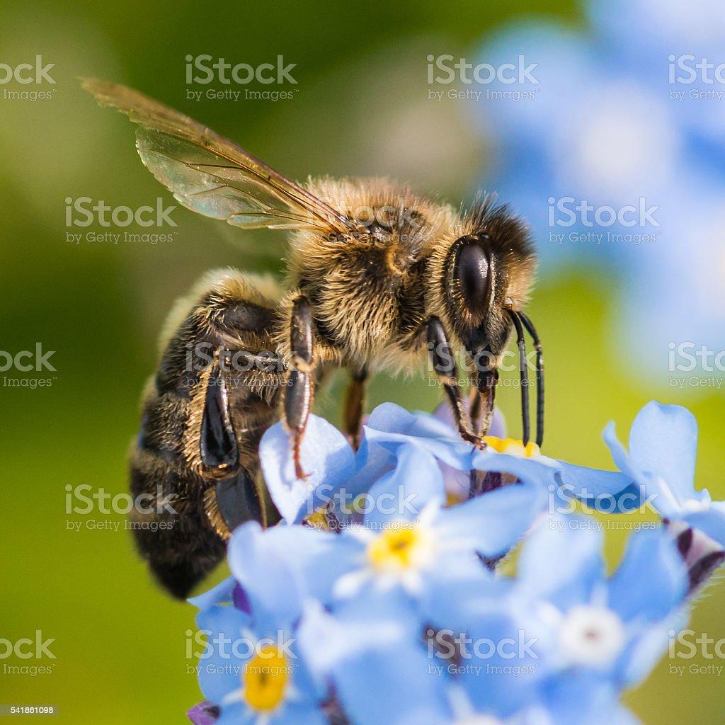 Honey Producer stock photo