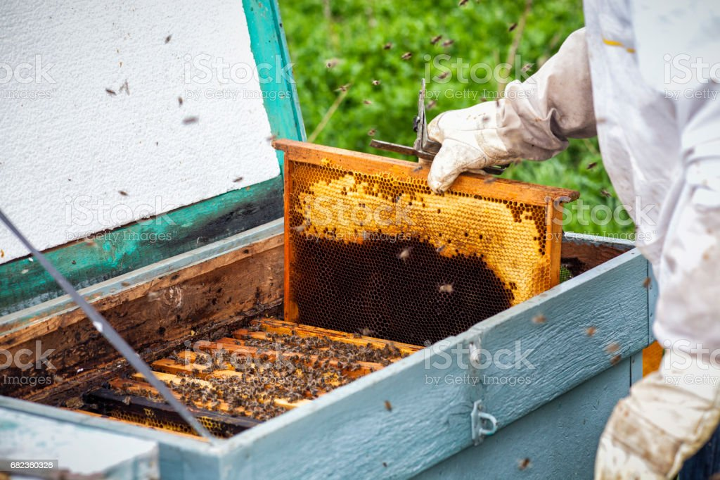 Honey workers foto stock royalty-free
