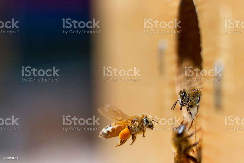 Honeybee greeting stock photo