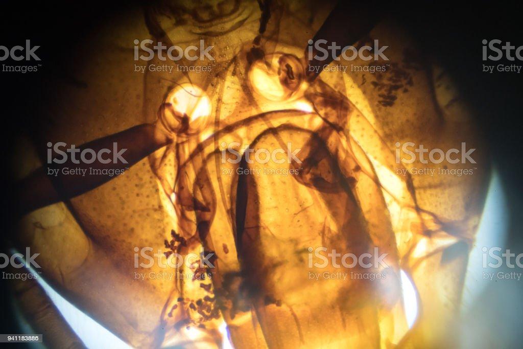 honeybee Mouth Parts under microscopy stock photo