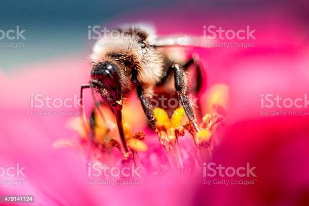 Photo of Honeybee