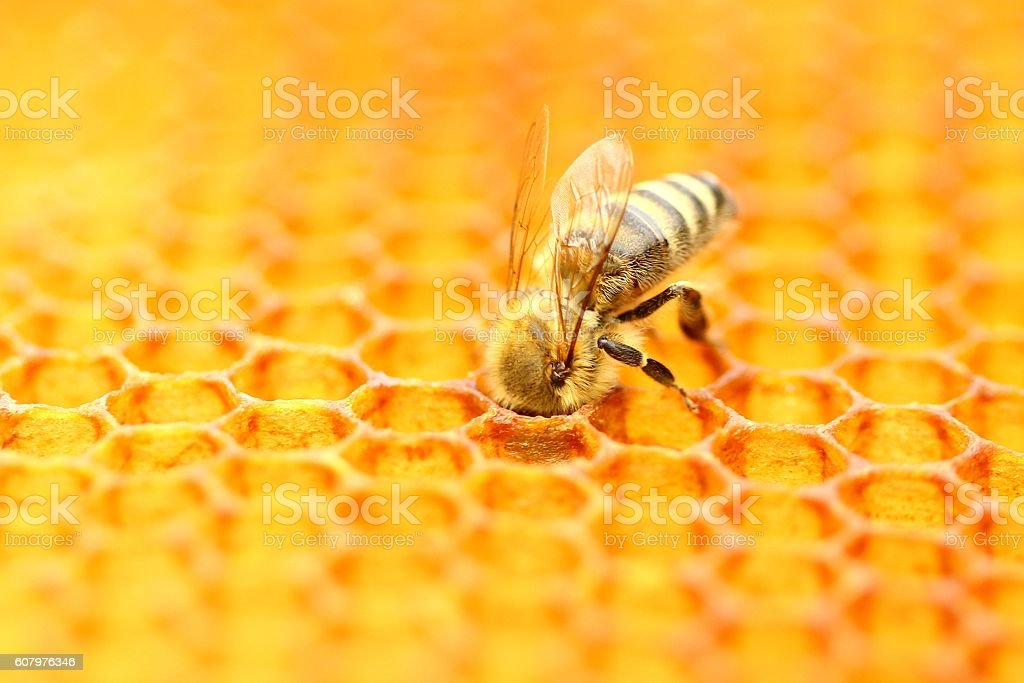 Honeybee stock photo
