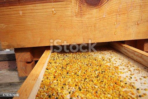 istock Honeybee pollen 479282616