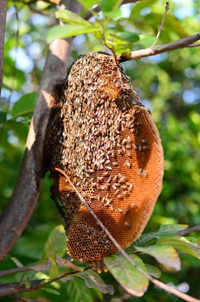 honigbienen - bienenstock - bienenstock stock-fotos und bilder