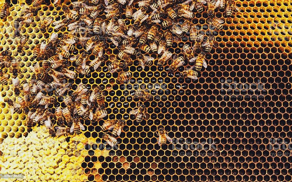 Honeybees Lizenzfreies stock-foto