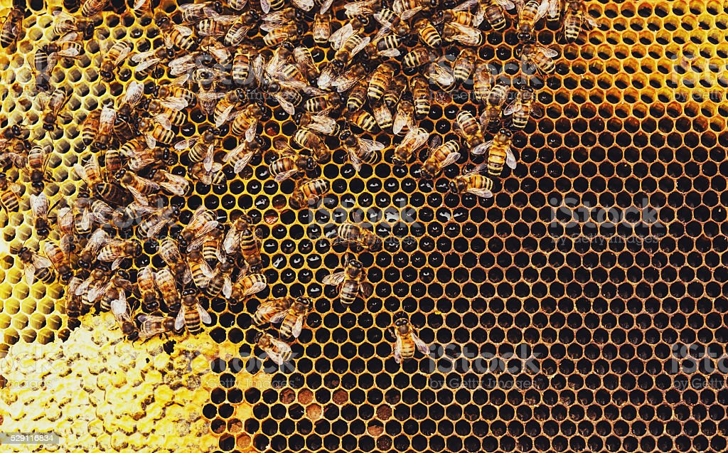 Honeybees - foto de acervo