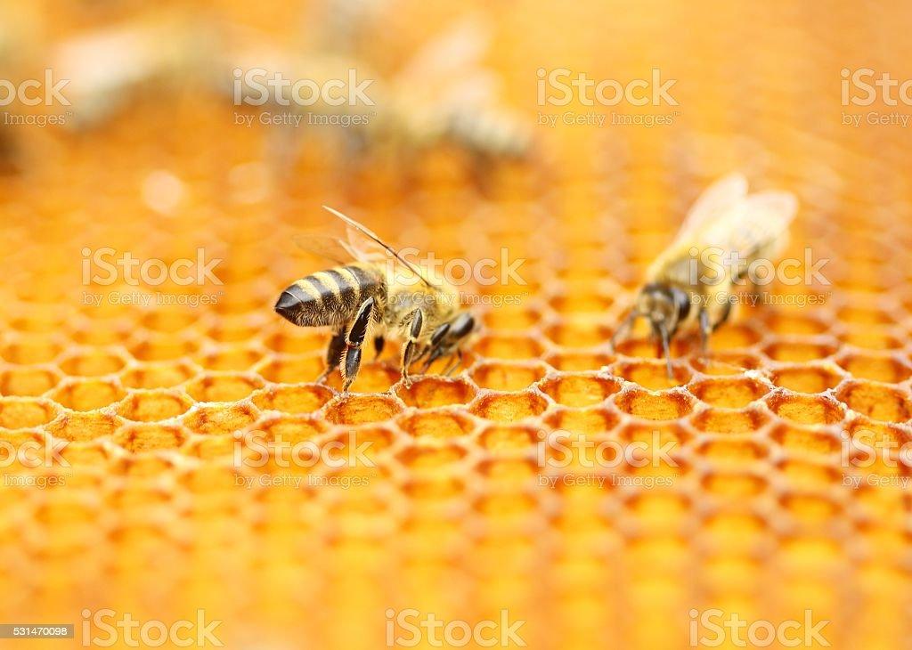 Honeybees stock photo