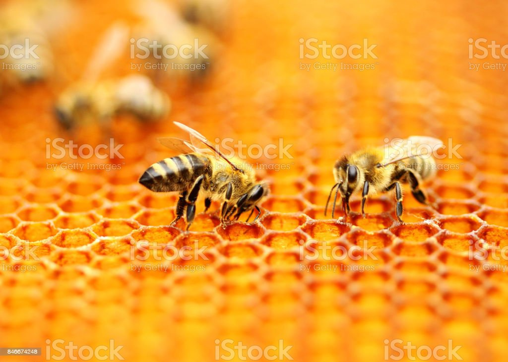 Honeybees stock photo