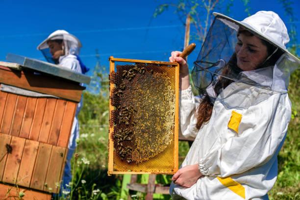 Honeycomb and beekeeper stock photo
