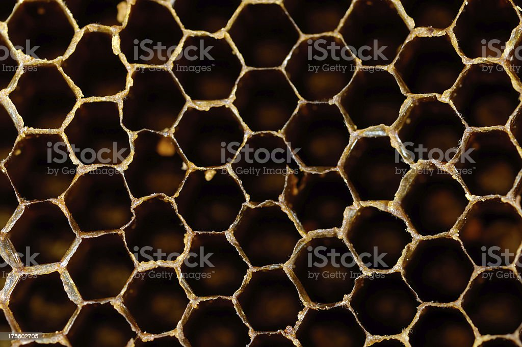 Honeycomb, Beehive royalty-free stock photo