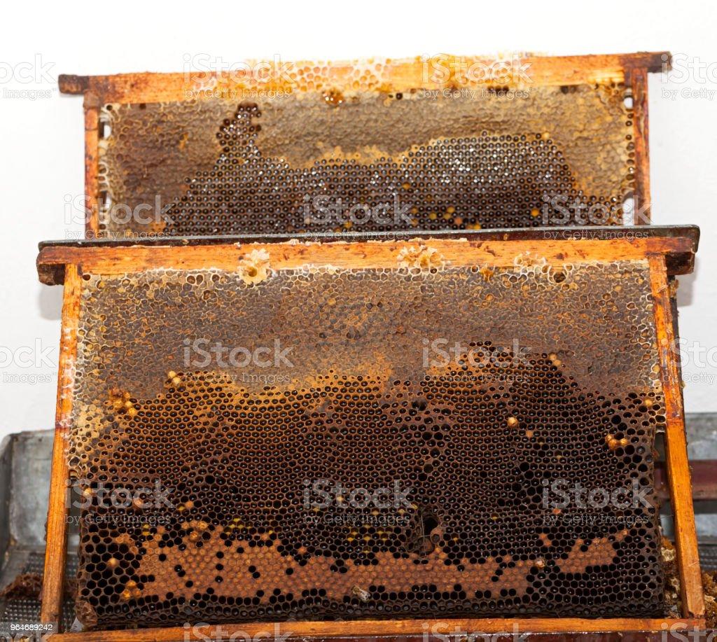 Honeycomb close up royalty-free stock photo