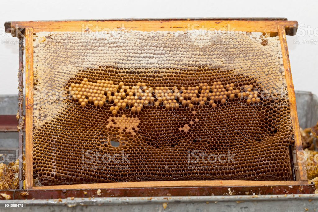 Honeycomb close up royalty-free stock photo