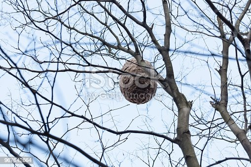 giant beehive hung from the tree
