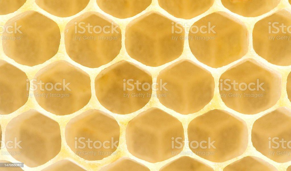 Honeycomb. Extremely close-up royalty-free stock photo