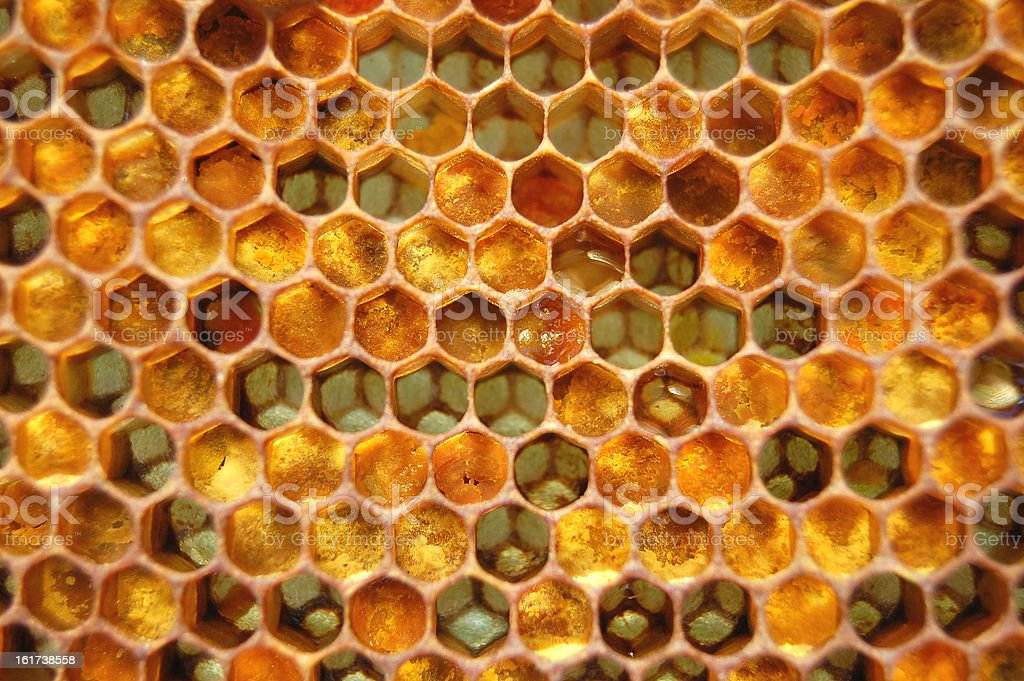 Honeycomb filled with honey royalty-free stock photo