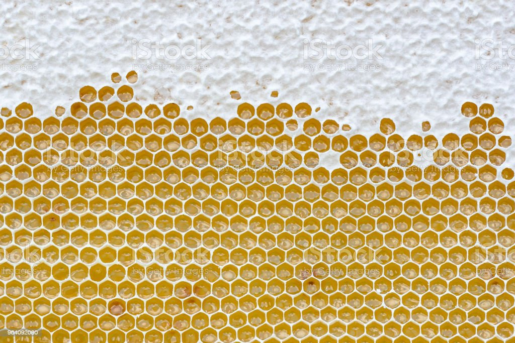 Honeycomb full of honey. Beekeeping concept - Royalty-free Agriculture Stock Photo