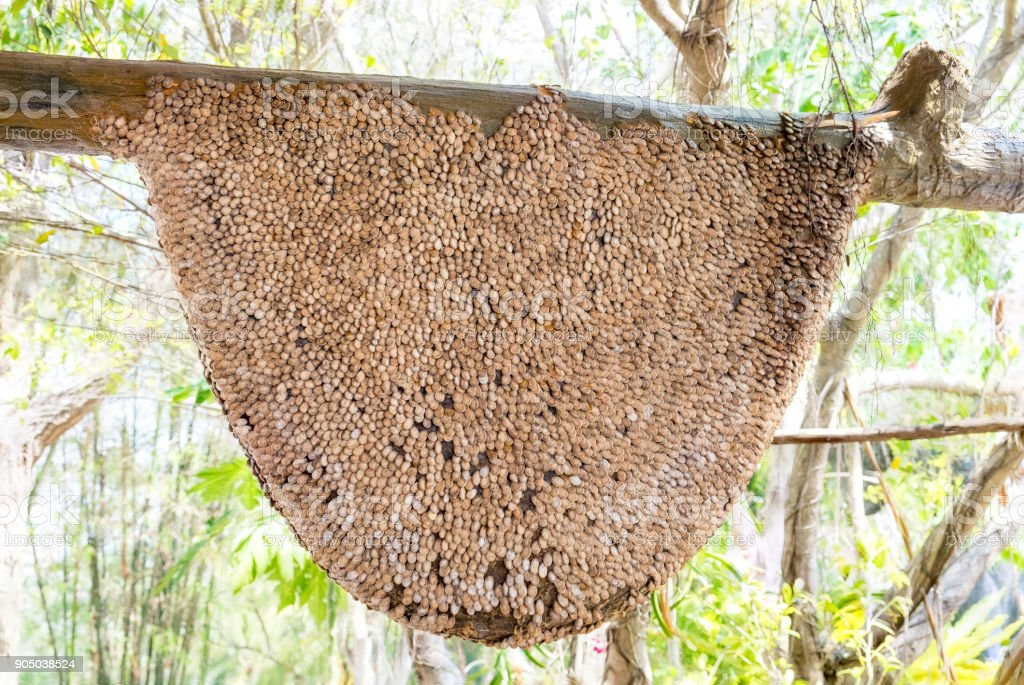 Honeycomb large,creepy,made from rind watermelon seeds stick stock photo