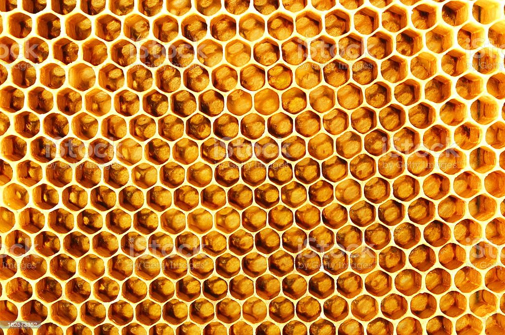 Honeycomb royalty-free stock photo