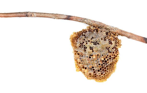 bienenwabe - bienenstock stock-fotos und bilder