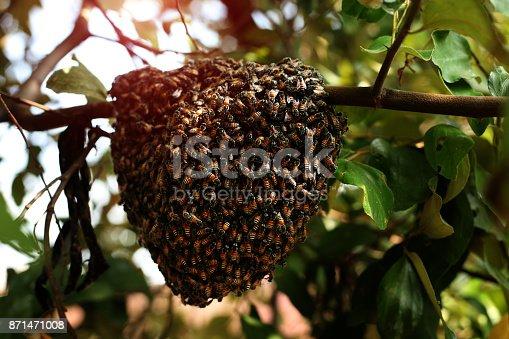 istock Honeycomb 871471008