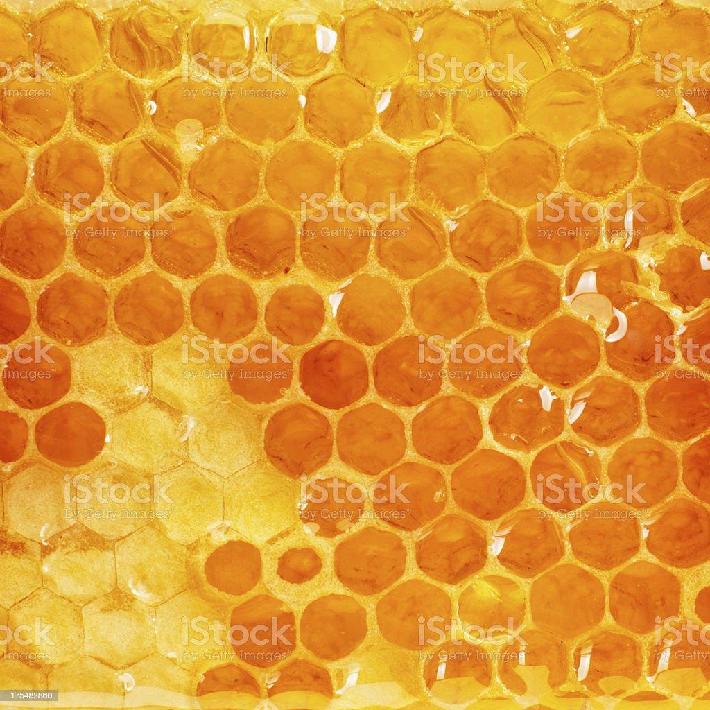 Honeycomb slice stok fotoğrafı