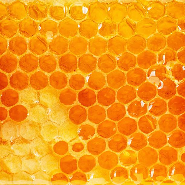 Bienenwabe slice – Foto