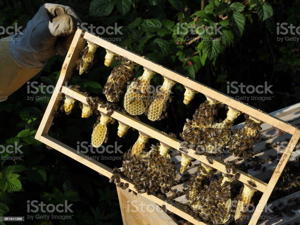 Nido de abeja con colmena y el apicultor - foto de stock