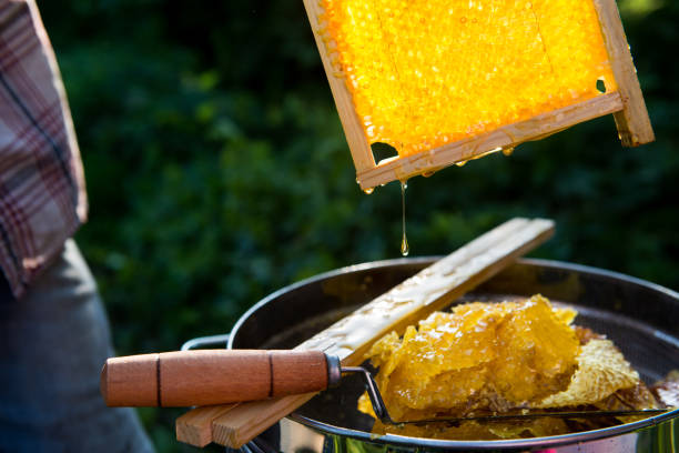 Honeycomb with honey beautifully glowing in the sunlight closeup stock photo