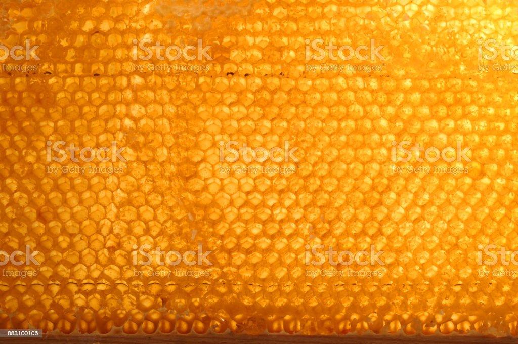 honeycomb with honey. stock photo