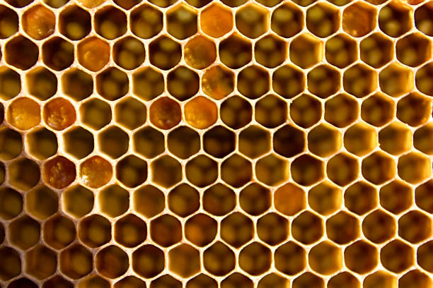 Honeycombs filled with honey closeup. stock photo
