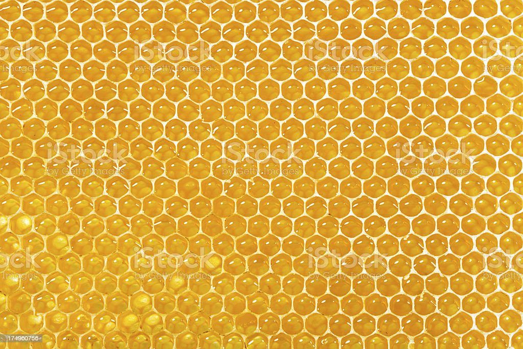 honeycombs filled with honey stock photo