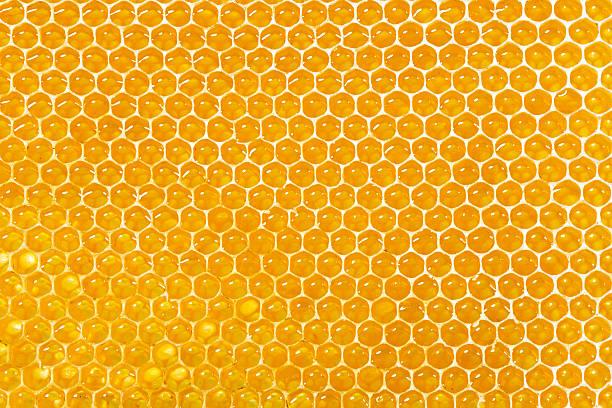 honeycombs cheia com mel - honeycomb imagens e fotografias de stock