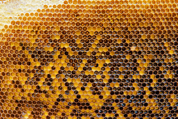Honeycombs with honey. Natural background. stock photo