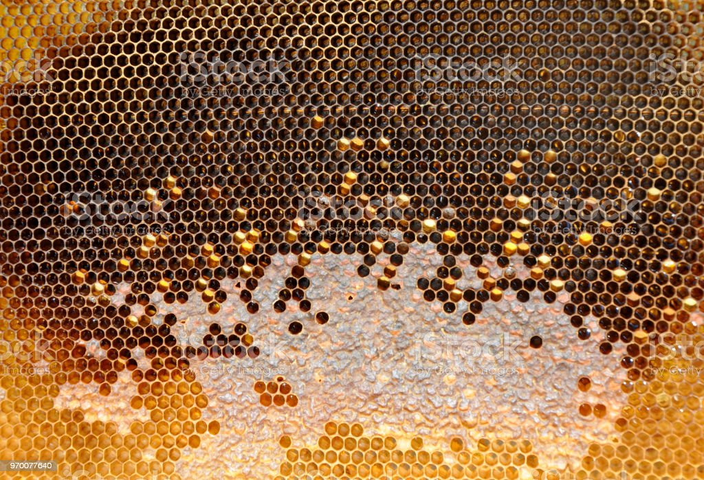 honeycombs with sealed cells stock photo
