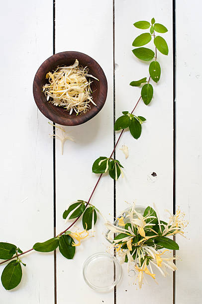 Honeysuckle Vine and Blossoms on a White Picnic Table stock photo