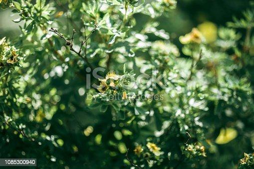 Plant, Botanical, Flower, Russia, Botany, Close-up, Garden