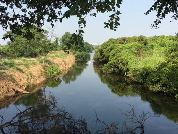 hong kong mai po nature reserve, yuen long - réserve naturelle photos et images de collection