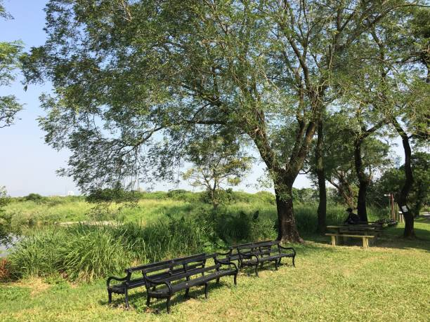 hong kong mai po nature reserve, yuen long - nature reserve stock photos and pictures