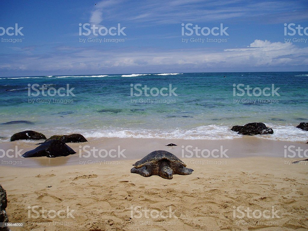 honu on beach 1 royalty-free stock photo
